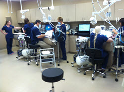 Veterinary Dental Facility Arizona